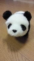 mini panda.jpg